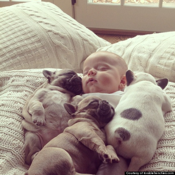Baby Snuggles with Puppies