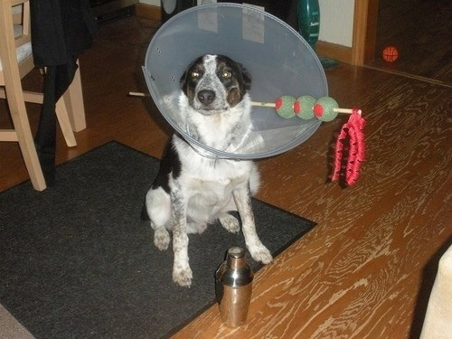 Dog Martini - Great Dog Costume