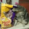 Meow Mix Cat