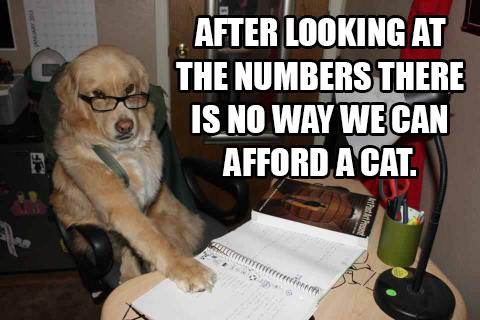 No way we can afford a cat.