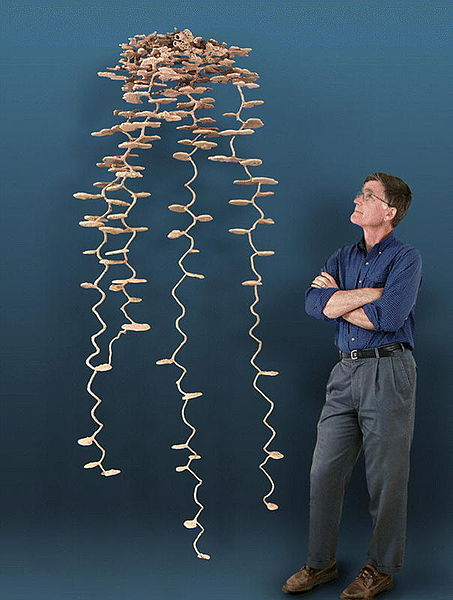 This is What an Anthill Looks Like Underground