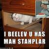 Stapler Cat